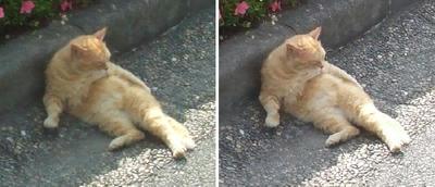 起きようとする猫交差法立体画像