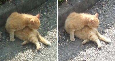 眠気襲う猫交差法立体画像