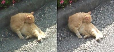 また寝る猫交差法立体写真