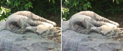 暑さに耐え寝る猫交差法立体画像