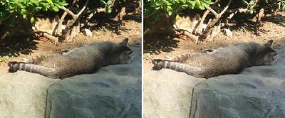 暑さに耐え足を投げ出す猫交差法立体画像