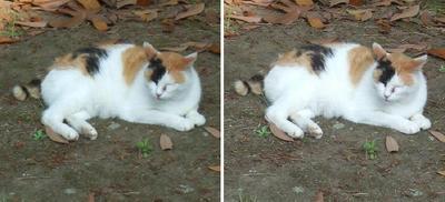 ゆっくり休む猫交差法立体画像