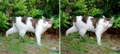 茂みから出てきた猫交差法立体画像