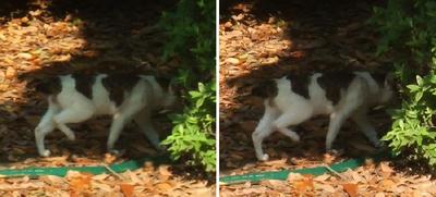 無視する猫交差法立体写真
