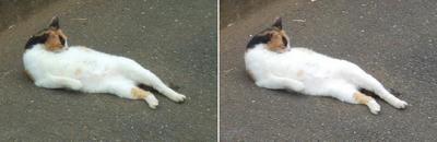 くつろぐ猫交差法立体画像