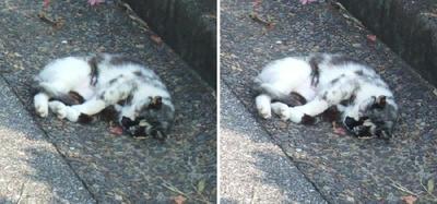 寝相の悪い猫交差法立体画像1