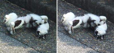 寝相の悪い猫交差法立体画像2