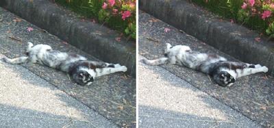 寝相の悪い猫交差法立体画像3