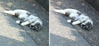 寝相の悪い猫交差法立体画像4