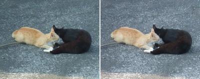 コソコソ話をする猫交差法立体画像
