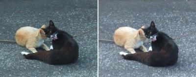 ベーする猫交差法立体写真
