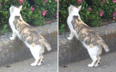 休憩場所を探す猫交差法立体画像