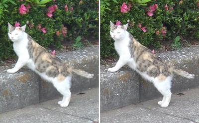 尋ねる猫交差法立体画像