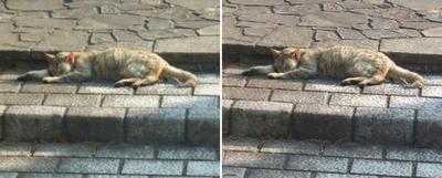 ぐったり猫交差法立体画像