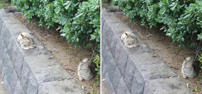 三つ巴の猫交差法立体画像