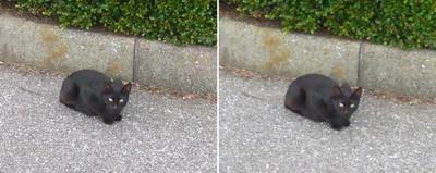 黒猫交差法立体画像