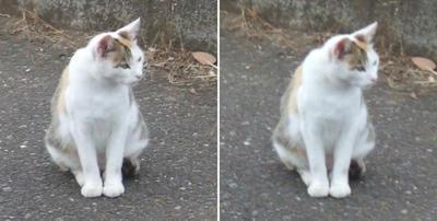 三つ指つく猫交差法立体画像