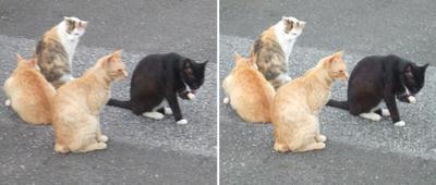 またまた猫集会交差法立体画像