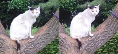 木の上の猫交差法立体画像