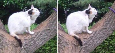 木の上の猫交差法立体画像2