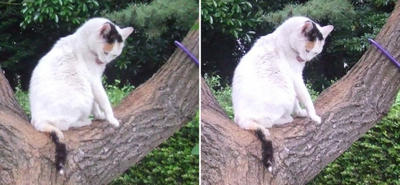 木の上の猫交差法立体画像4