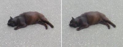 地べたで寝そべる黒猫交差法立体画像