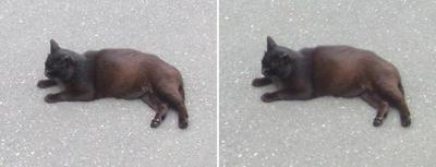 地べたで寝そべる黒猫交差法立体画像2