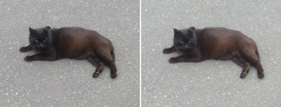 地べたで寝そべる黒猫交差法立体画像3