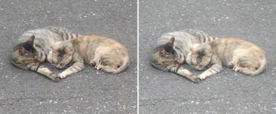 猫の親子立体画像
