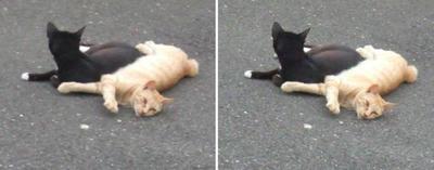 仲の良い猫交差法立体画像