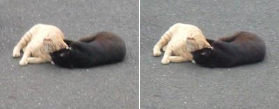 仲の良い猫交差法立体画像2