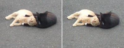 仲の良い猫交差法立体画像3