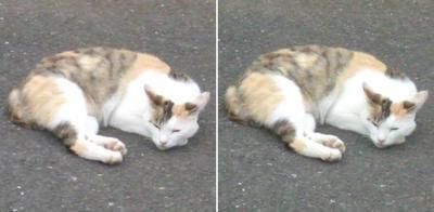 寝に入る猫交差法立体画像