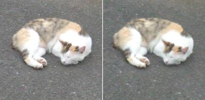 寝に入る猫交差法立体画像2