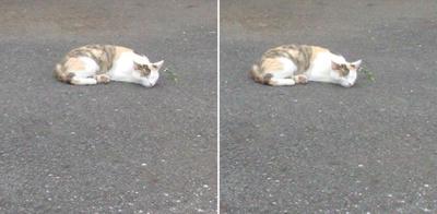寝に入る猫交差法立体画像3