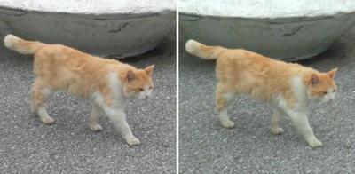 寄って来る?猫交差法立体画像