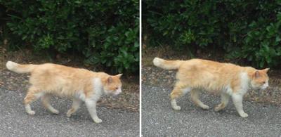 来ると思いきや猫交差法立体画像