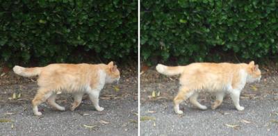 通りすぎる猫交差法立体画像