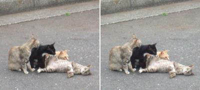 新ネタをする猫交差法立体画像