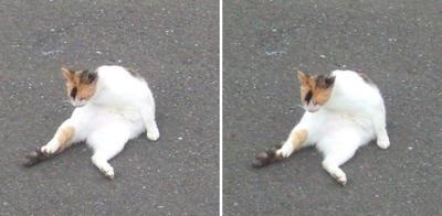 起き上がる猫交差法立体画像