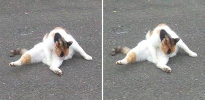 柔軟する猫交差法立体画像