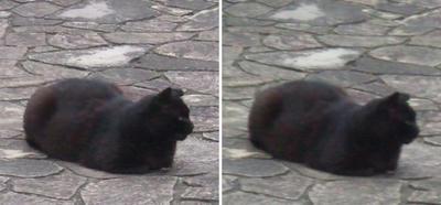 堂々黒猫1交差法立体画像