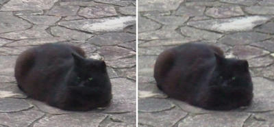 堂々とした黒猫2交差法立体画像