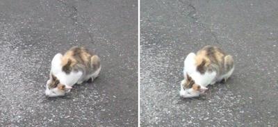 伏せ猫交差法立体画像