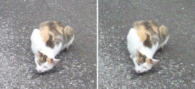 ホフク猫交差法立体画像