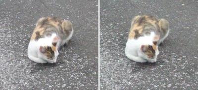 前進猫交差法立体画像
