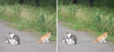 ファミリー猫たち交差法立体画像