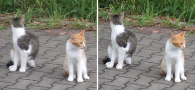 家族猫たち交差法立体画像2