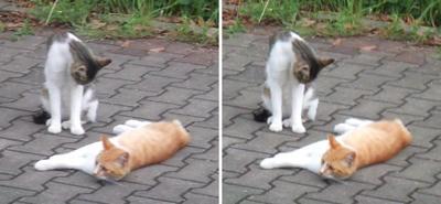 くつろぎ猫たち交差法立体画像3