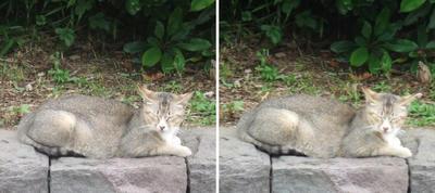寝ている猫交差法立体画像
